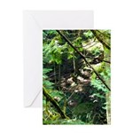 forest light Greeting Cards