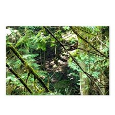 forest light Postcards (Package of 8)
