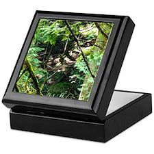 forest light Keepsake Box