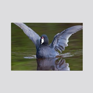 Coot Rectangle Magnet