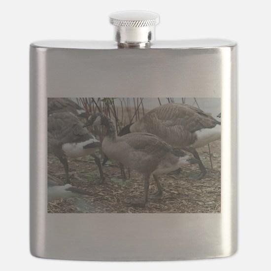 Goslings Eating Flask