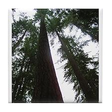 Towering Trees Tile Coaster