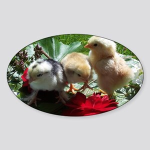 little cute chick Sticker (Oval)