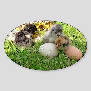 little chicken Sticker (Oval)