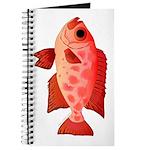 Glasseye Journal