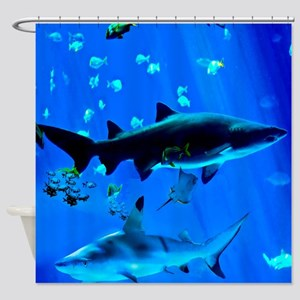 2 Black Tipped Sharks Shower Curtain