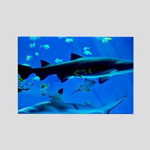 2 Black Tipped Sharks Rectangle Magnet
