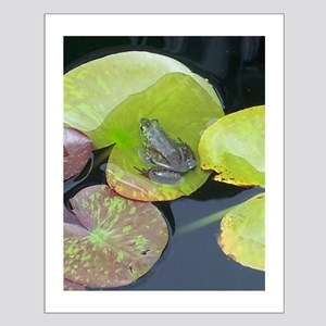 Close Up Frog on Lily Pad Small Poster