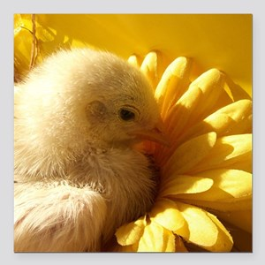 "chicken chick in a flowe Square Car Magnet 3"" x 3"""