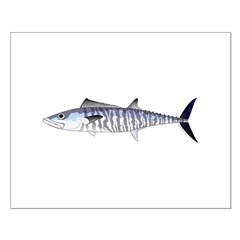 Narrow-barred Spanish Mackerel Posters