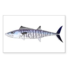 Narrow-barred Spanish Mackerel Decal