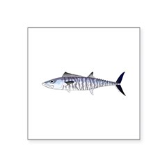 Narrow-barred Spanish Mackerel Sticker