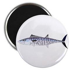 Narrow-barred Spanish Mackerel Magnets