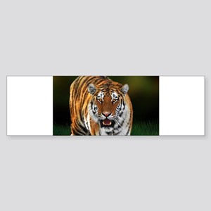 Tiger on Green Bumper Sticker