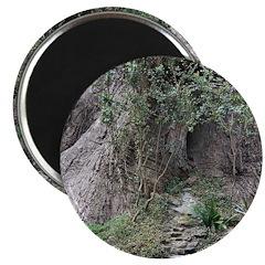 Eucalyptus Tree Magnets