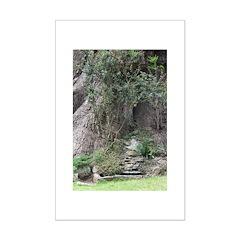 Eucalyptus Tree Poster Print