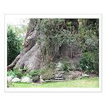 Eucalyptus Tree Small Poster