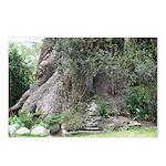 Eucalyptus Tree Postcards (Package of 8)