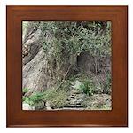 Eucalyptus Tree Framed Tile