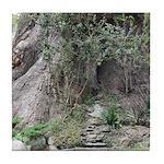 Eucalyptus Tree Tile Coaster