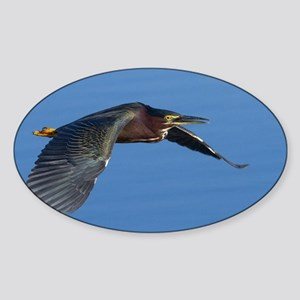 Green Heron Sticker (Oval)