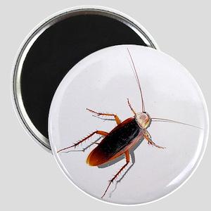 Pet Roach Magnet