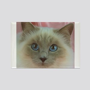 Siamese Cat gifts Magnets