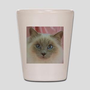 Siamese Cat gifts Shot Glass
