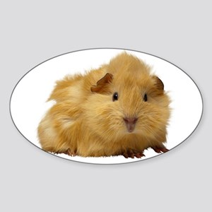 Guinea Pig gifts Sticker