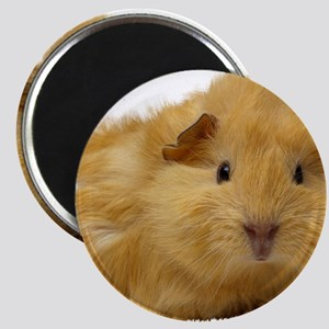Guinea Pig gifts Magnets