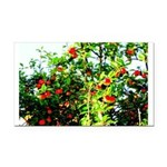 Apple tree Rectangle Car Magnet