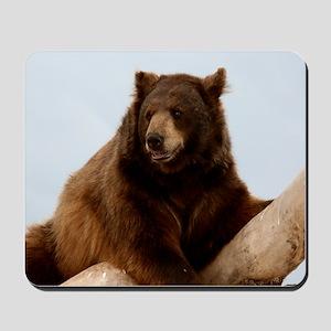 Bear on Log Photo Mousepad