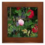 Rare Rose Framed Tile