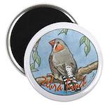 Zebra Finch Nouveau Magnet
