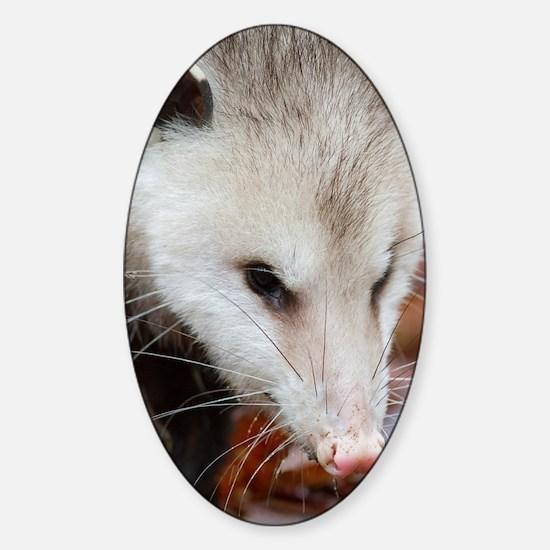 Opossum Sticker (Oval)