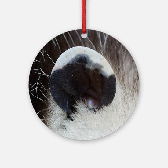 Opossum Ear Round Ornament