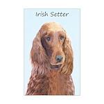 Irish Setter Mini Poster Print