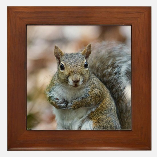 Cute Squirrel Framed Tile