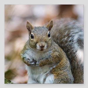 """Cute Squirrel Square Car Magnet 3"""" x 3"""""""