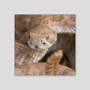 "Rattlesnake Square Sticker 3"" x 3"""