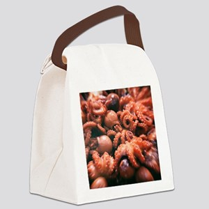 baby octopus Canvas Lunch Bag