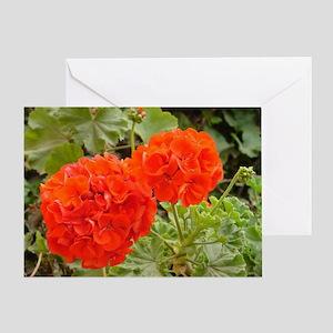 Orange Geranium  Greeting Card