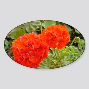 Orange Geranium  Sticker (Oval)