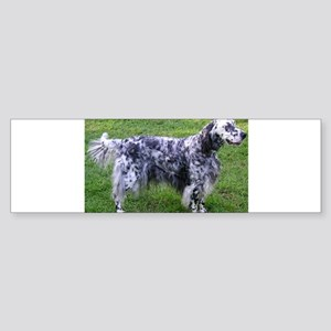 English Setter full Bumper Sticker