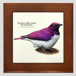 Violet-Backed Starling Framed Tile