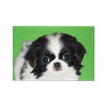 Japanese Chin Rectangle Magnet (10 pack)