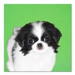 Japanese Chin Square Car Magnet 3