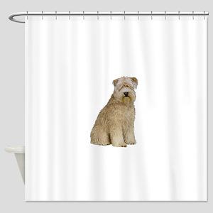 Wheaten Terrier (8) - sit Shower Curtain
