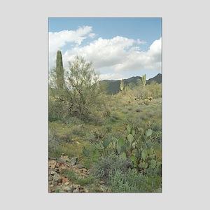 Cactus Coloring Photo Mini Poster Print