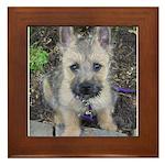 Emma Cairn Terrier 1 Framed Tile